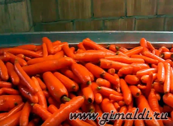 Полезные и лечебные свойства моркови