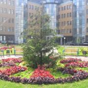 Озеленение городских территорий