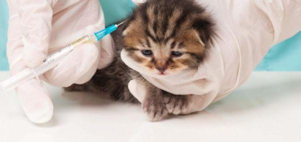 Комплексная прививка для кошек что входит