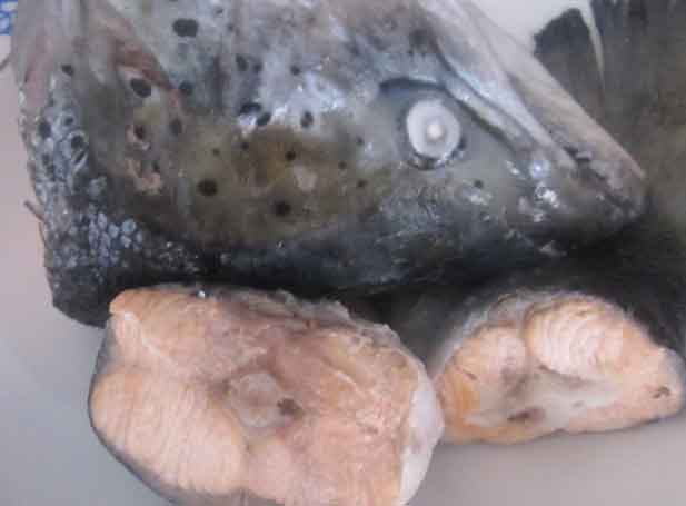 Суп рыбный с лососем
