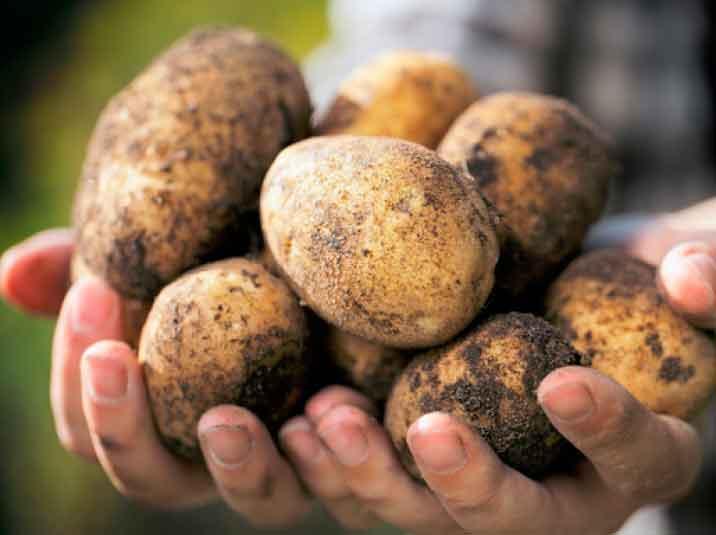 Вся правда о картошке