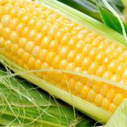 Кукуруза от фермера