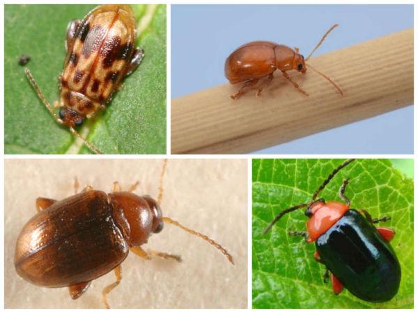 Как бороться с насекомыми в квартире?
